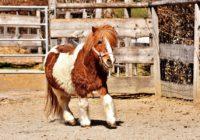 Mazajam ponijam patīk dejot