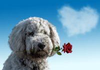Horoskops 8.februārim – veiksmīga diena!