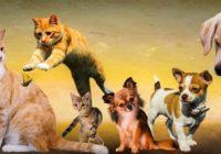 Fen Šui: mājdzīvnieku ietekme uz jūsu mājokļa enerģiju