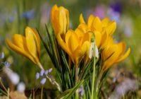 Horoskops 12.martam: dažus gaida grandiozas pārmaiņas