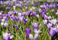 Horoskops 20.martam: enerģiska diena