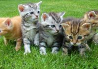 Kaķis – talismans: izvēlieties to pēc savas horoskopa zīmes