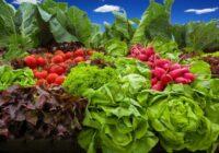 Dārzeņu kopējās stādīšanas noslēpumi