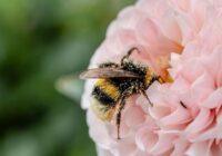 Kamene, bite vai lapsene ielidoja mājā? Uzzini, ko tā sola!