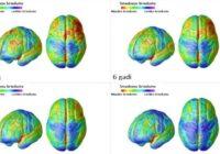 Kā nobriest bērnu smadzenes: ko ir svarīgi zināt par bērna attīstības posmiem