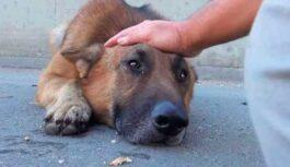 Puisis vienkārši noglaudīja suni, bez mājām esošais suns gulēja un raudāja…